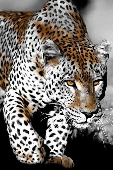 Пронзительный взгляд леопарда — Алмазное Хобби  Взгляд Леопарда